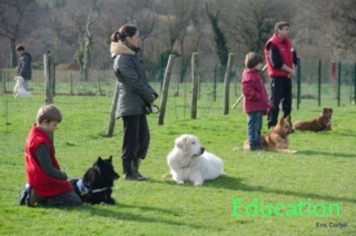 club canin finistere